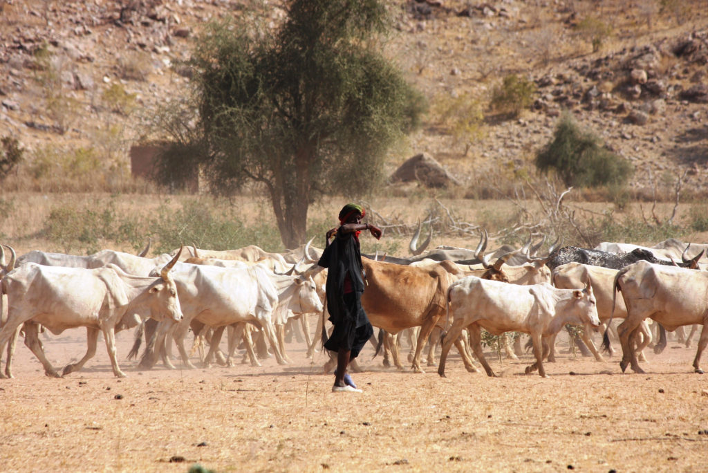 A herder near the border of Mauritania and Senegal where resilience to drought disasters is a priority.