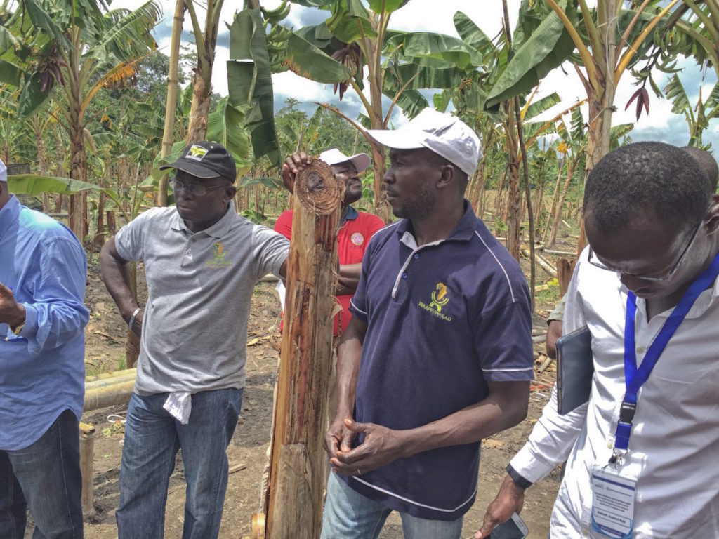 Albert Kangah (center) speaking with journalists about his plantain farm, Plantation Dougba. An example of the impact of agricultural transformation on small holder farmers.